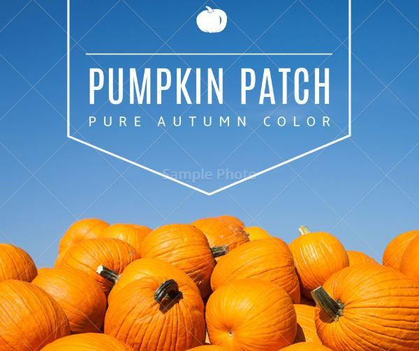 pumpkin_copy_hzy_170213_10