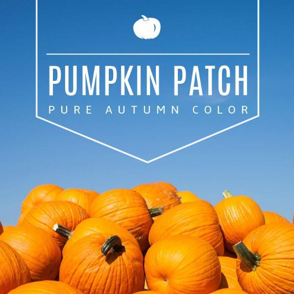 pumpkin_copy_hzy_170210_24