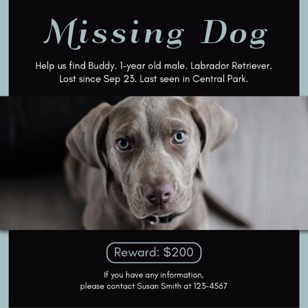 missingdog_lsj20171009