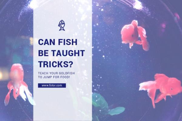 CAN FISH_copy_CY_20170118