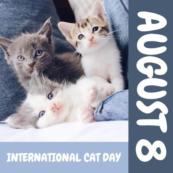 cat1_lsj_20200804