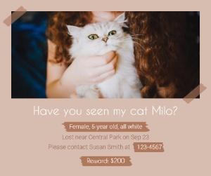 lost_cat01_lsj20171009