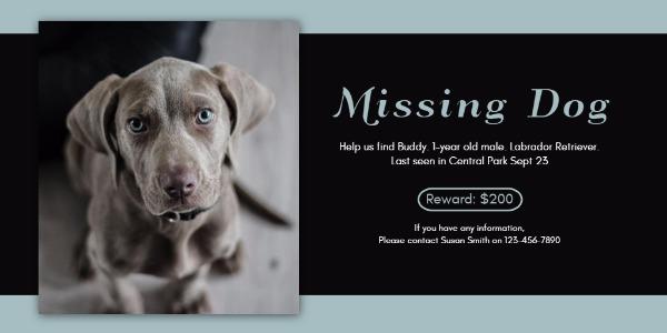 missing dog_lsj20180403