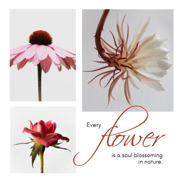flower_ip_lsj_20181106