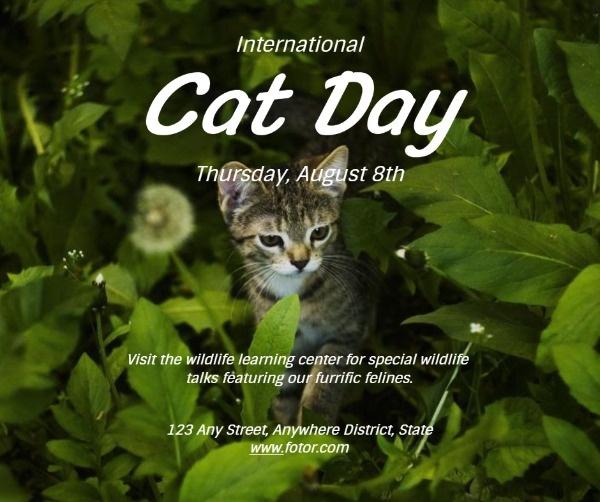 catday3_lsj_20200804