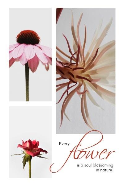 flower_p_lsj_20181106