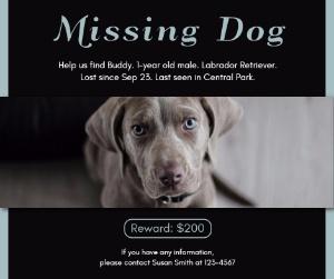 missing_dog_lsj20171023