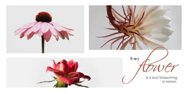 flower_tp_lsj_20181106