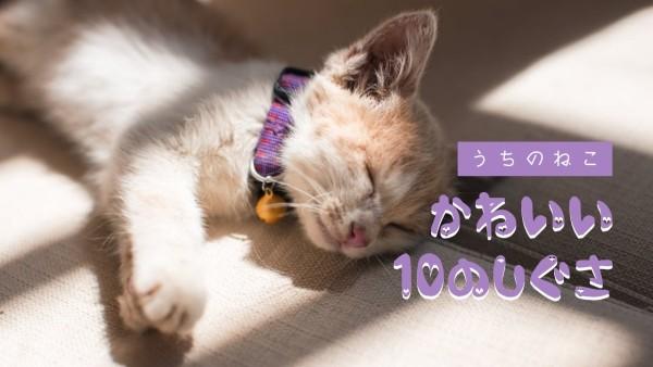 cat_wl20170417-jp-localised