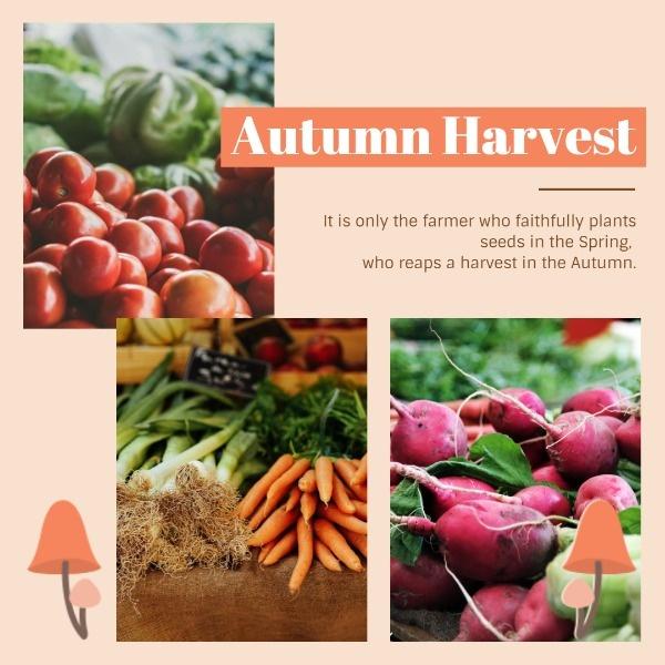 harvest_ip_lsj_20181106