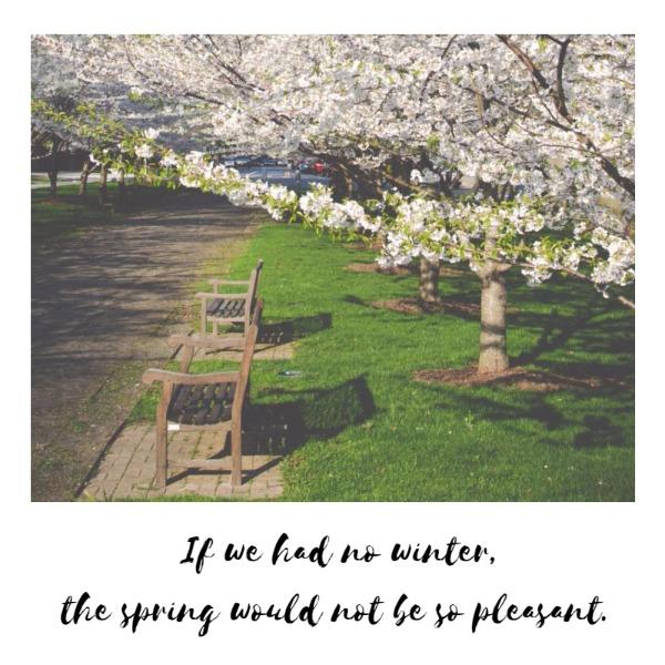 the spring_ip_lsj20180408