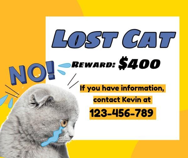 lost cat-tm-210322