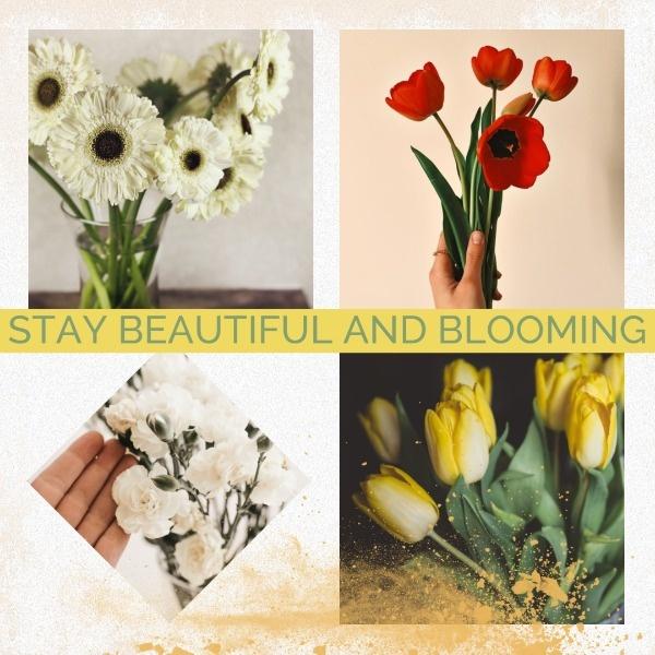 blooming_wl_20200121