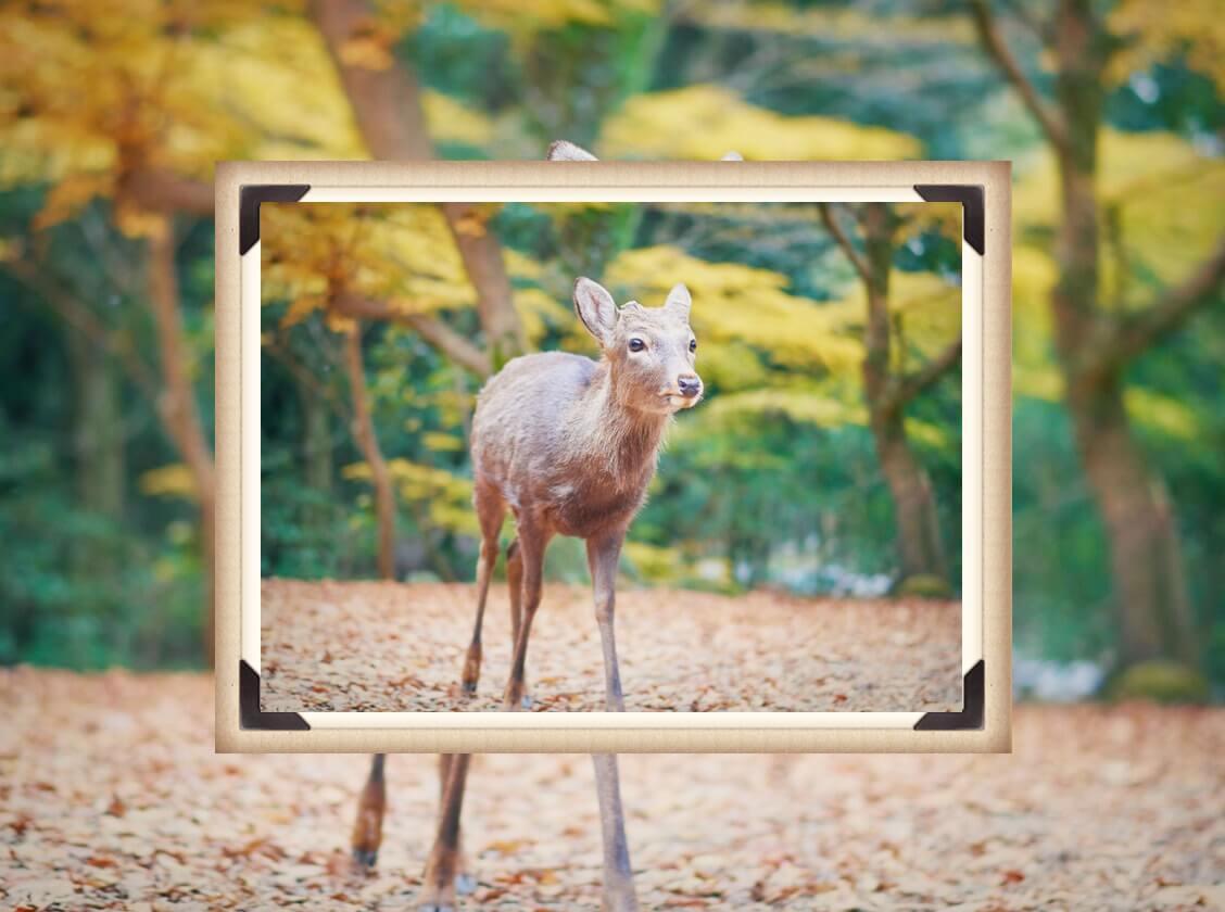 鹿から画像を縮小