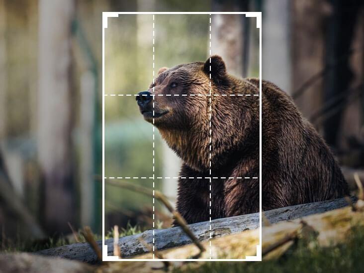 Обрезать изображение от медведя